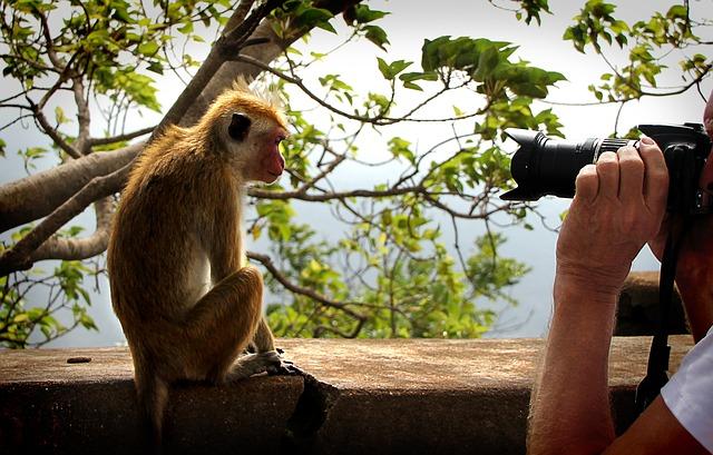 fotografování zvířat